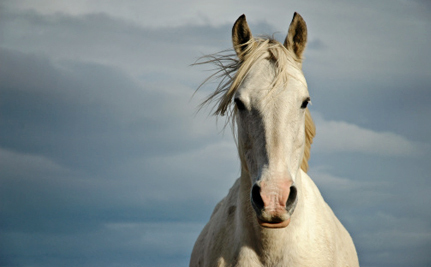 How Did Hundreds of Research Horses Make it into France's Food Supply?