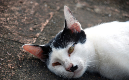 20 Cats Found Tortured, Burned and Murdered