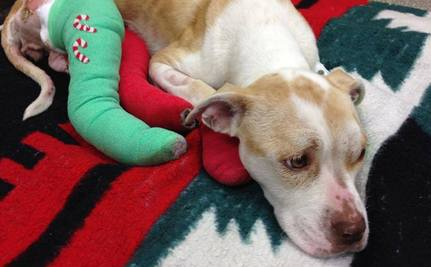 Success! Charges in Dog Dragging Case Upgraded to Felony Cruelty