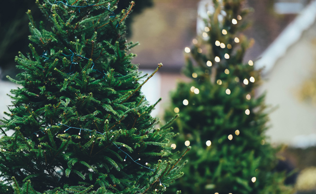 5 Incredibly Unique Ways to Recycle a Christmas Tree
