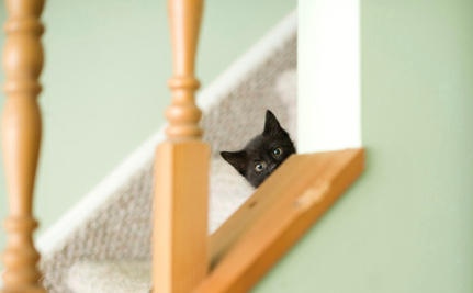 Daily Cute: Go on a Climb With These Tabby and Tuxedo Kittens