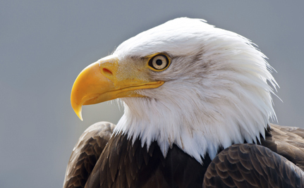 Bald Eagles Are Mysteriously Dying in Utah, But No One Knows Why