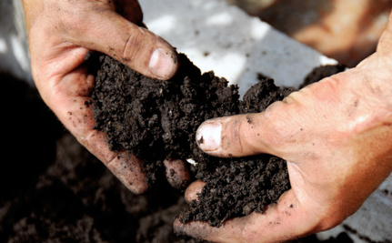 The Easiest Way to Tell if You Have Healthy Soil