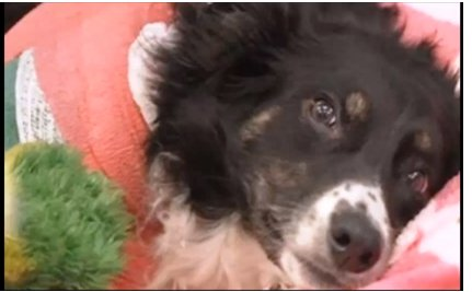 Good Samaritans Save Dog When Her Veteran Owner Can't Afford To