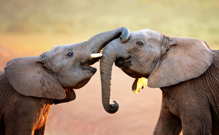 China Takes a Commendable Stance Against Elephant Poaching