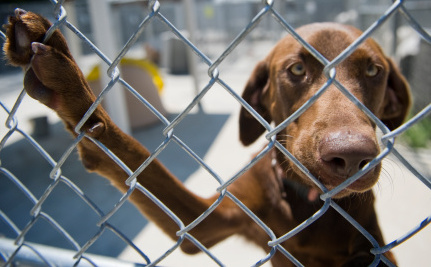 Animal Euthanasia on the Chopping Block in Colorado
