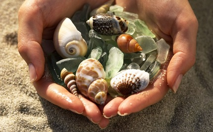 Image result for collect shells