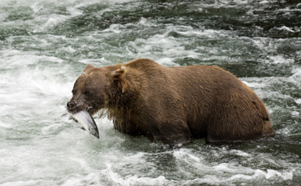 Watching Bears Is Way More Profitable Than Shooting Them