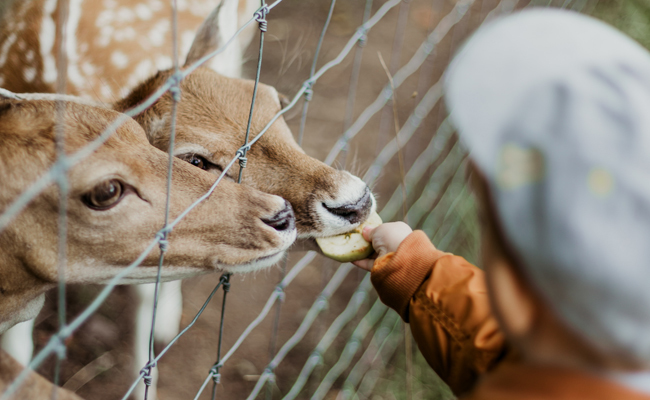 5 Reasons You Should Boycott the Zoo