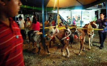 Ponies Used for Children's Carousel Rides are Being Abused