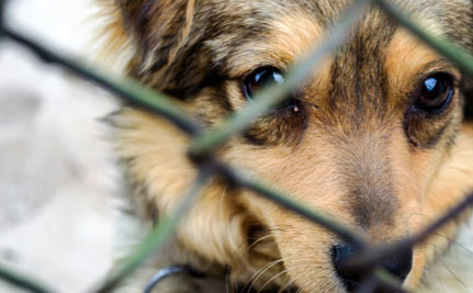 Victory! New York Cracks Down on Puppy Mills