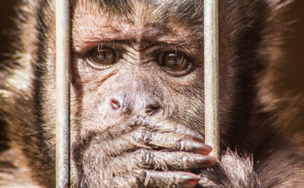 It's Time For the UK to Stop Monkeying Around With the Primate Pet Trade