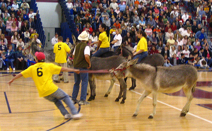 Success! Donkey Basketball Game Cancelled At 11th Hour