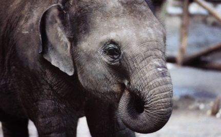 10 Worst Zoos For Elephants