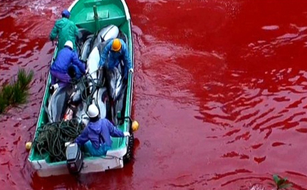 5 Ways You Can Help Stop Slaughter of Dolphins in Taiji, Japan