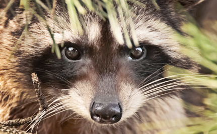 Animal Abuse Exposed on Animal Planet's Call of the Wildman