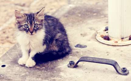 Finally, The Last State Without a Felony Animal Cruelty Law Proposes One