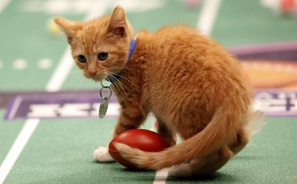 "Cute and Cuddly ""Kitten Bowl"" Has a Mission: Find Homes for 71 Kittens"