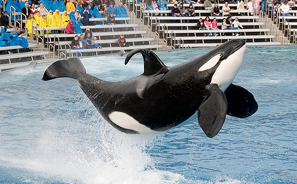 5 Reasons Blackfish is More Educational Than SeaWorld