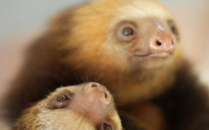 9 Reasons Sloths Shall Inherit the Earth