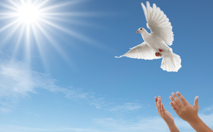 Why Releasing Doves is Anything But Peaceful