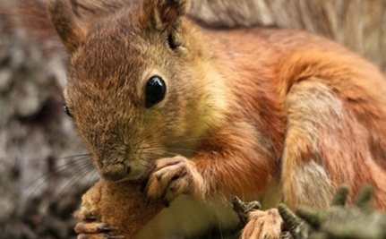 A Town in New York is Having Its Annual Squirrel-Killing Contest Soon