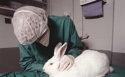 Is Your Beauty Worth the Lives of 11.5 Million Innocent Animals?