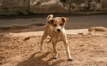 Sochi Poisoning Thousands of Stray Dogs for the Olympics