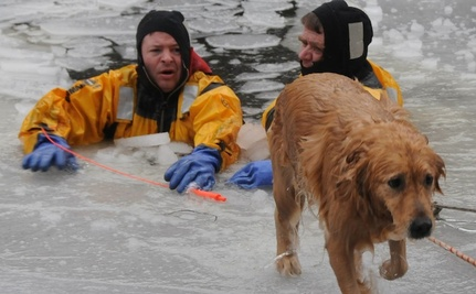 Dogs in Frozen Peril: 4 Amazing River Rescues by Heroes Who Cared