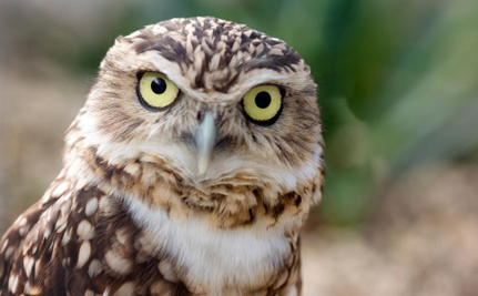 200 Owls Are in Danger of Losing Their Home