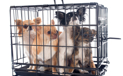 What Turns an Animal Rescuer Into an Animal Hoarder?