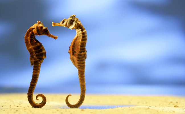 10 Animals Who Mate For Life