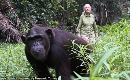 The Heartfelt Hug That Said it All: Chimp Thanks Jane Goodall For Rescue