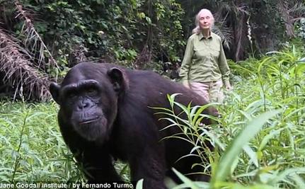The Heartfelt Hug That Said it All: Chimp Thanks Jane Goodall For Rescue