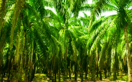 Success! Kellogg's Will Stop Using Palm Oil from Damaged Habitats