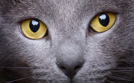 New Study Reveals Cats and Dogs Have Superpower Vision