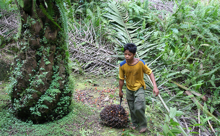 Labor Abuse: Another Reason to Ditch Palm Oil