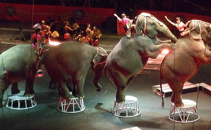 Mexico's Saying Adios to Circus Animals: Why Won't the U.S. Do the Same?