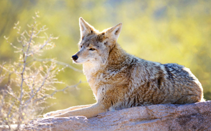 Yes, California. Banning Wildlife Killing Contests Is an Excellent Idea
