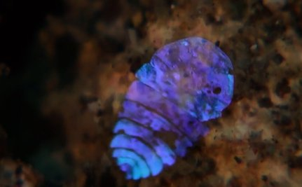 """This """"Sea Sapphire"""" Glows Like A Star Underwater"""