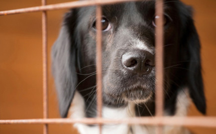 The Next City to Ban the Sale of Puppy Mill Puppies