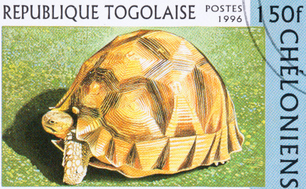 Why Disfiguring Tortoises Is an Act of Kindness