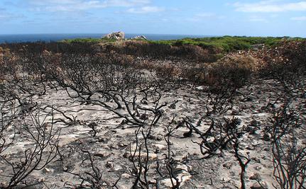 Aboriginal Australians Managed the Forest Better than Europeans