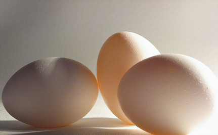 The Contradictions of Organic Eggs