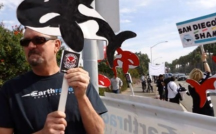 Protesting the Protestors: Is SeaWorld Using Corporate Activists?