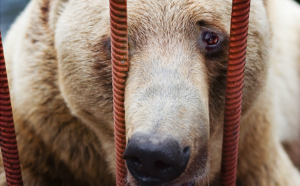 Wisconsin Moves to Crack Down on Exotic Animal Ownership