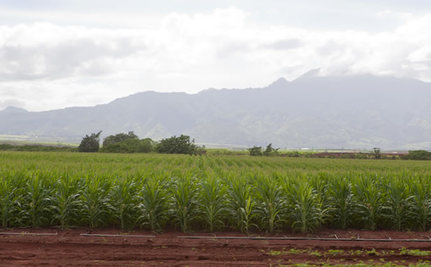 Trouble in Paradise: Hawaiians Push Back Against Big Ag