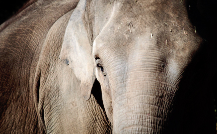 Anne the Abused Circus Elephant Faces a Disappointing Future