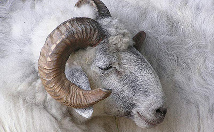 7 Animal Friendly Alternatives to Wool