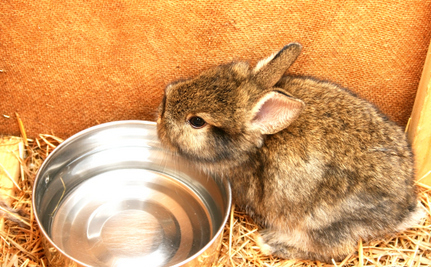 60-Year-Old Dog Walker Stops Man from Throwing Baby Bunnies into River